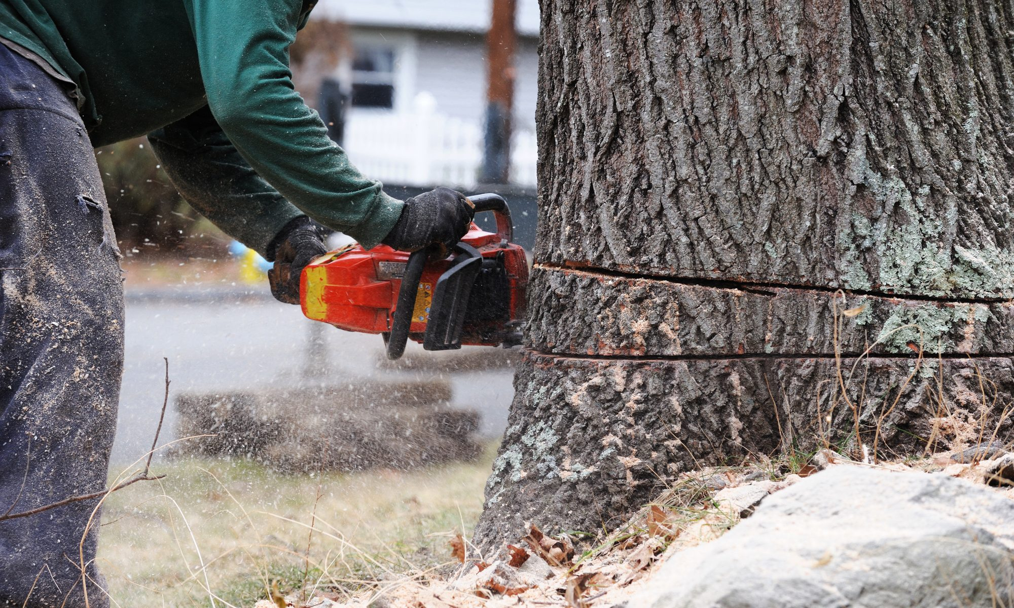 To Cut or Not to Cut: Tips for Hiring a Tree Removal Service