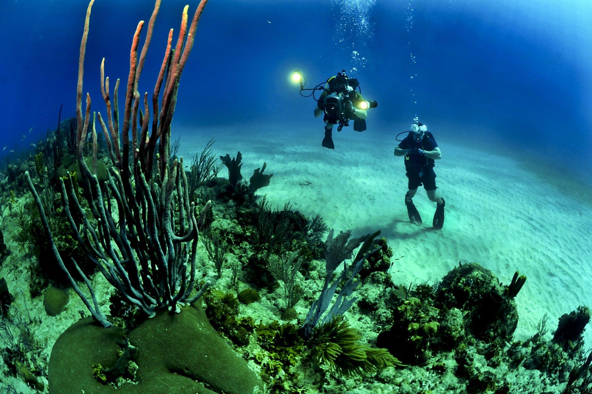A Waikiki Oahu Scuba Diving Guide