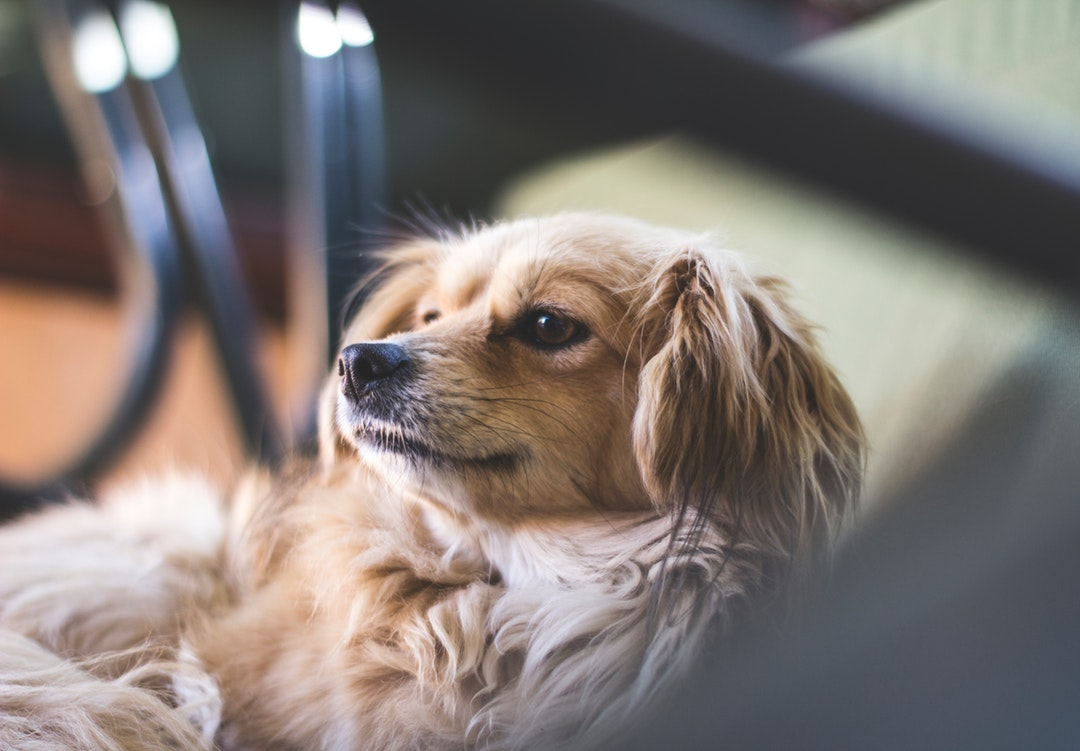 7 Low Maintenance Pets to Consider If You Live in an Apartment