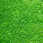 7 Tips for Fighting Lawn Diseases