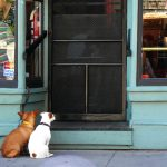 4 Key Reasons Why You Should Install a Dog Door