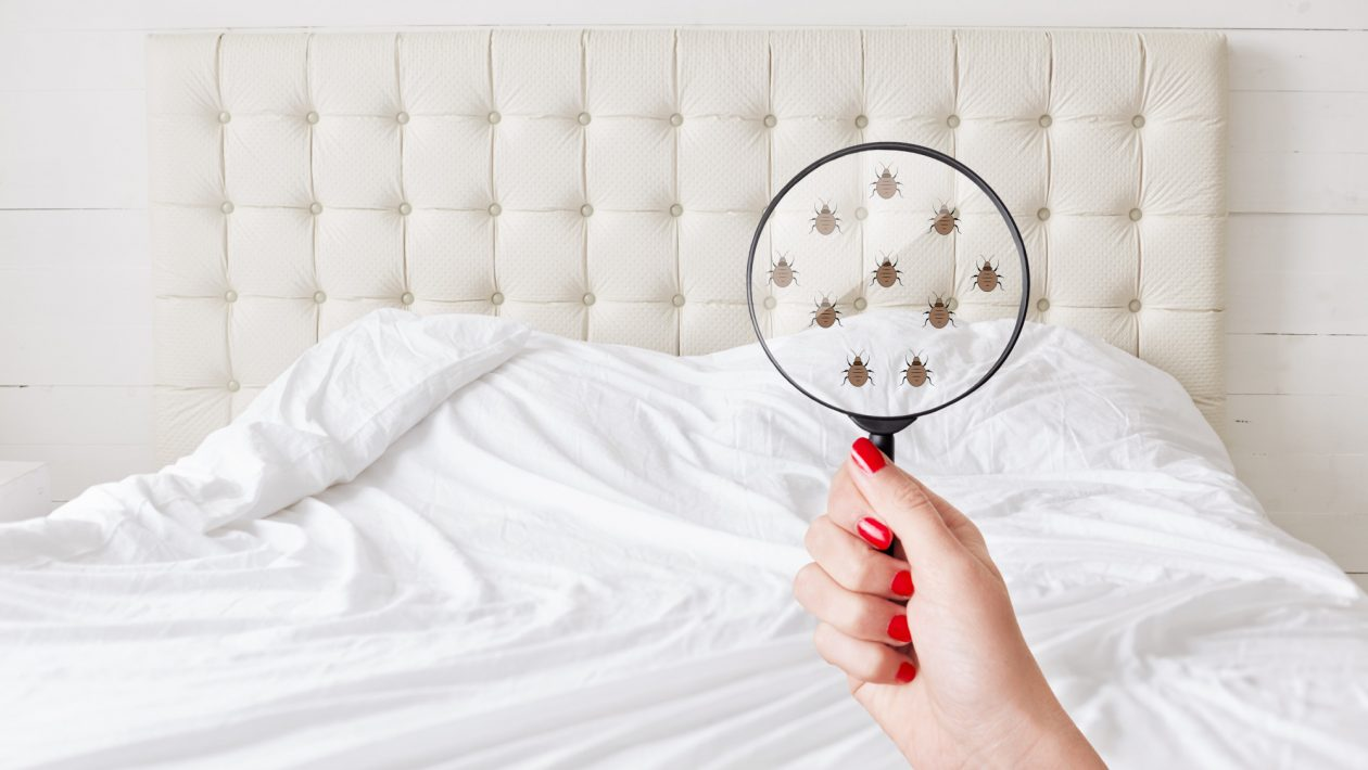 Itchy Situation: How to Spot Bed Bugs in Your Home