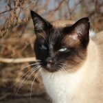 Breeds of Cats: Most Popular Cat Breeds to Bring Home