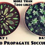 How to propagate succulents apartments therapy