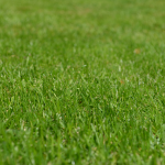 What are the best types of grass for garden?