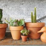Must know tips to water succulents