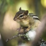 How to Get Rid of Chipmunks from Home, lawn and Garden Area?