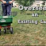 How To Overseed a Lawn In An Effective Way?